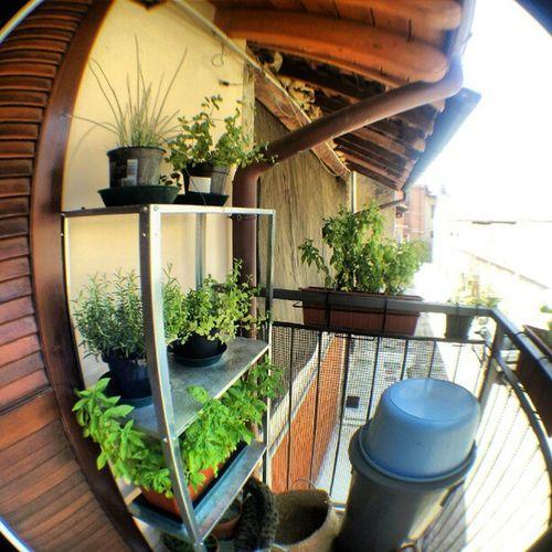 Grande orto sul balcone Noweed Erbe Spezie erbe