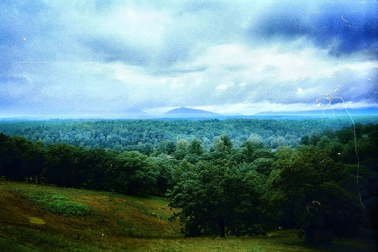 The mountains from the Biltmore Estate Beauty In Nature Blue Close-up Cloud - Sky Day Forest Green Color Growth Landscape Mountain Nature No People Non-urban Scene Outdoors Scenics Sea Sky Tranquil Scene Tranquility Tree Water