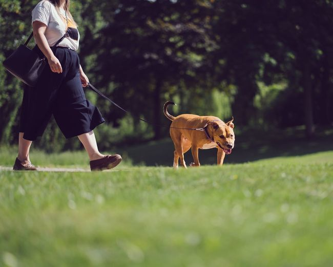 Low Section Of Woman With Dog Walking On Grassy Field At Park