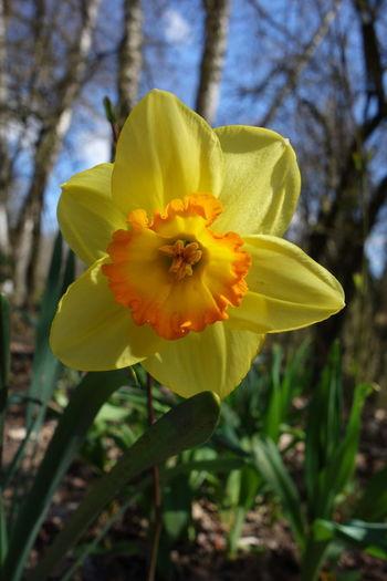 Spring Spring