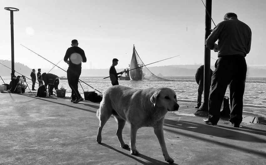 People with dog on sea against sky