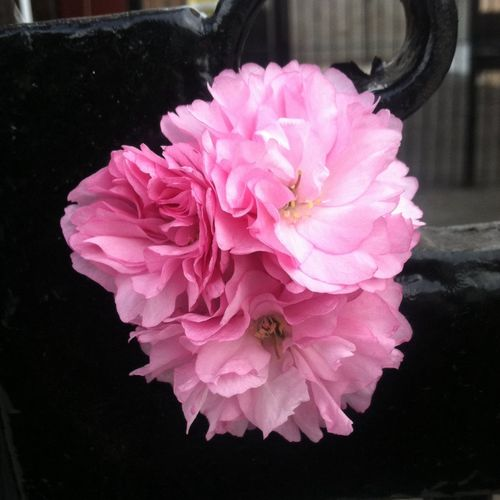 No Filter Pink Flower Bored Hd Photo