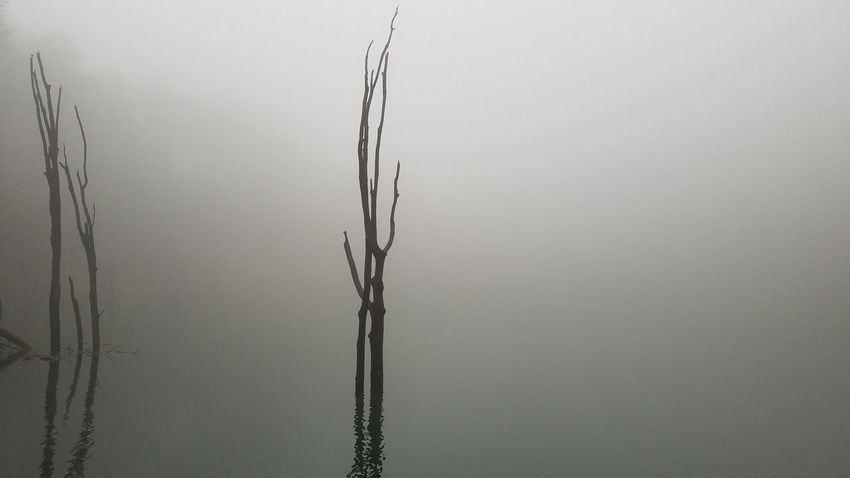 Dead Tree Reflection Fog Fog On The Water Water Close-up