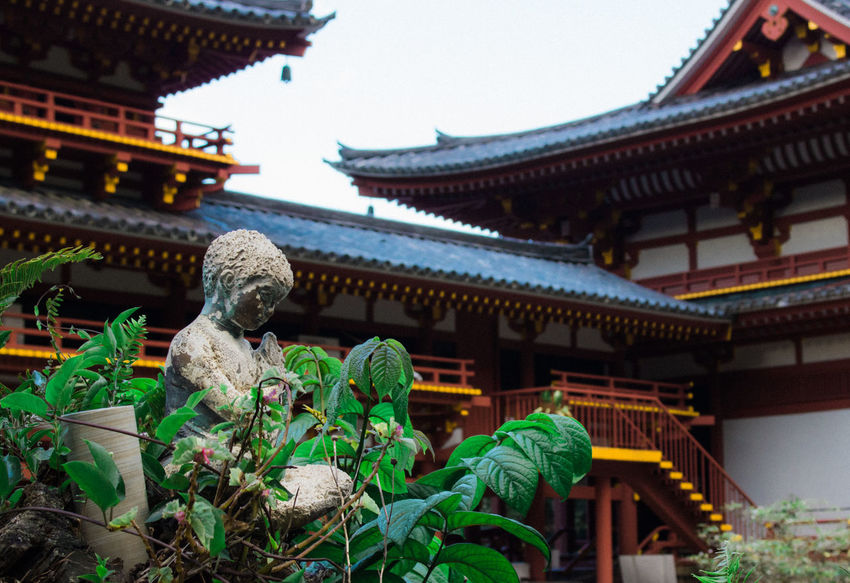 Buddhist Temple Japanese  Hawaii Bhuddha Buddhism EyeEm Selects Tradition Byodo-In Temple Temple Arts Culture And Entertainment Travel Destinations This Week On Eyeem Beauty In Nature No People Building Exterior Architecture Built Structure Outdoors Tree Flower Statue Close-up Day Roof Eaves