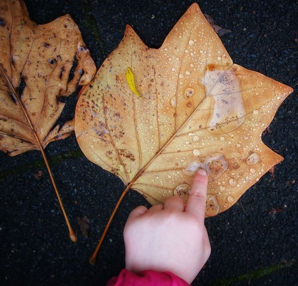 Why a drop of water means the world to me - MAinLoveWithLife and Little Girl Touching Drops Drops Of Water Drops Of Water On Leaves Leaves Autumn Autumn Leaves Autumn Colors Autumn Collection Autumn Colours Leaf Close-up Human Hand Connection Connected Connected With Nature Nature Nature_collection Nature Photography Naturelovers Childhood Childhood Memories #beauty #beautyindecay #VanessArt How I See The World