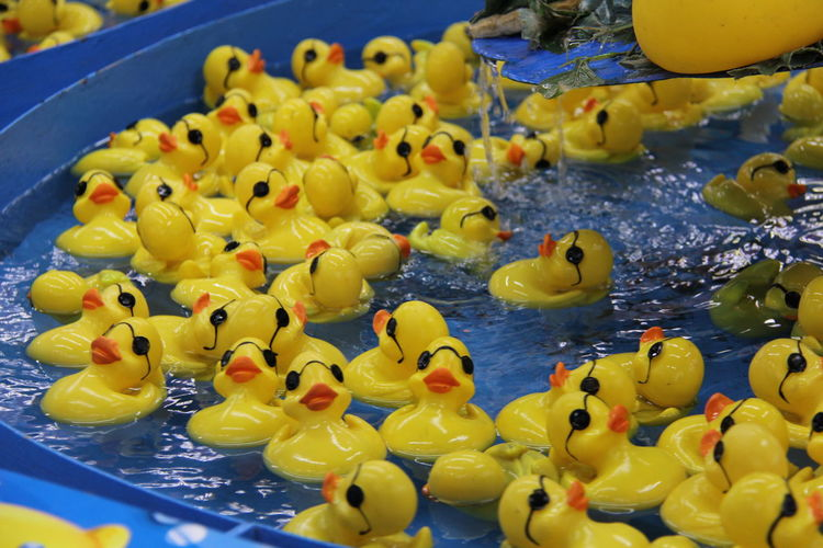 Yellow Rubber Ducks In Wading Pool
