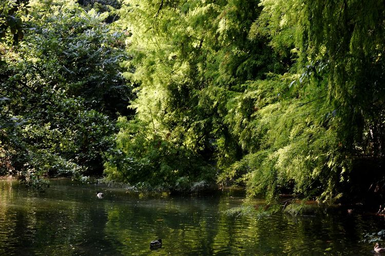 Water Nature Reflection Sunlight Tree Growth No People Outdoors Green Color Lake Day Tranquility Scenics Beauty In Nature