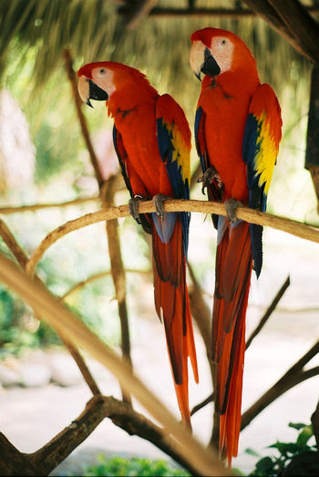 Animal Animal Themes Animal Wildlife Animals In The Wild Bird Colorful Animal Group Of Animals Macaw Outdoors Parrot Red Two Animals