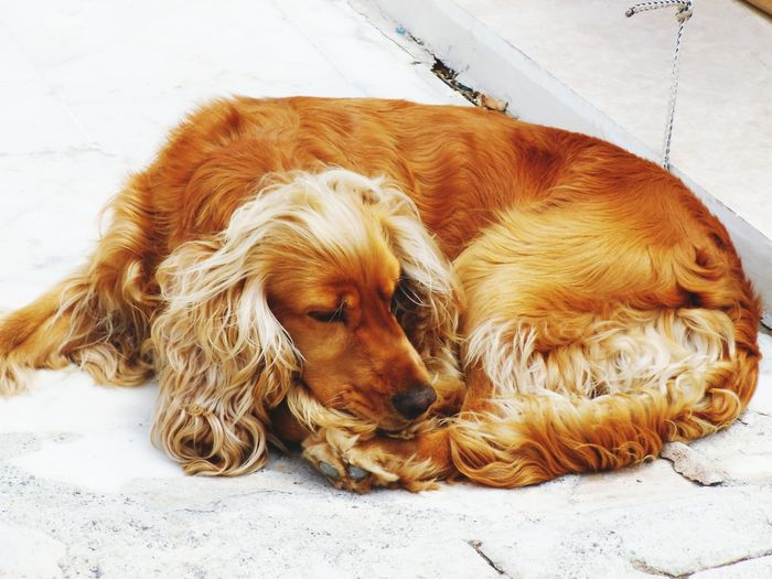 Close-up of a dog lying on floor
