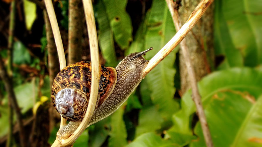 Animal Themes Beauty In Nature Climbing Close-up Gastropod Nature Plant Shell Snail Wildlife
