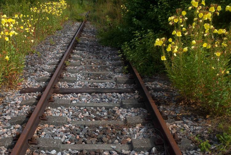 High angle view of railroad tracks in forest