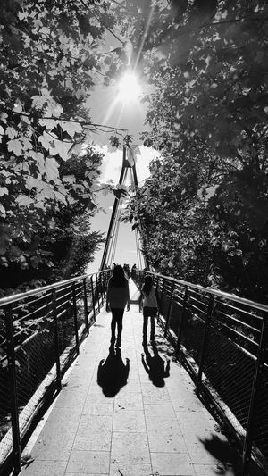 Sunlight Sun Tree Shadow Outdoors Sunbeam Nature Catching The Sun Bridge Photography Catching Light Architecture Monochrome Black And White