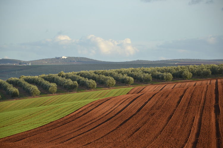 Alentejo, Portugal Agriculture Field Landscape Farm Crop  Nature Beauty In Nature