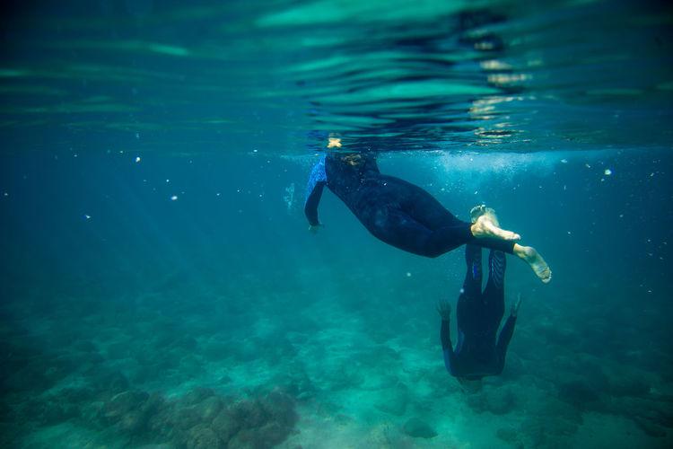Underwater Sea Water Swimming One Animal UnderSea One Person Animal Wildlife Adventure Sport Blue Animals In The Wild Sea Life Nature Aquatic Sport Marine Outdoors Underwater Diving Snorkeling