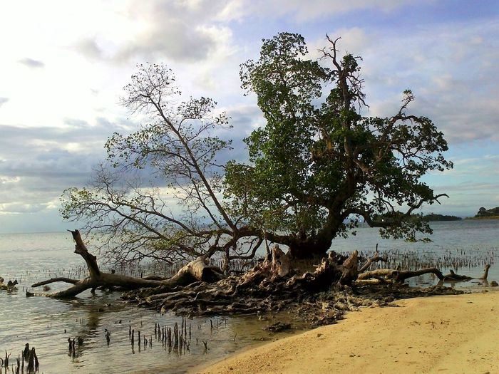 Beauty In Nature Cloud - Sky Day Dead Tree Horizon Over Water Landscape Nature No People Outdoors Sand Scenics Sea Sky Tranquil Scene Tranquility Tree Water