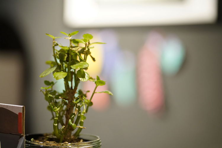 Plant Nature No People Close-up Indoors  Focus On Foreground Flower Freshness Growth Flowering Plant Potted Plant Vase Green Color Leaf Table Decoration Selective Focus Beauty In Nature Plant Part Houseplant Flower Arrangement Small Flower Pot
