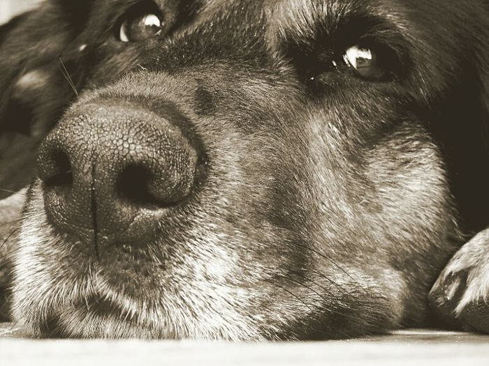 Dog Everyday Emotions Beautiful Nature Just Something Mood Of The Day Dogs Sadness