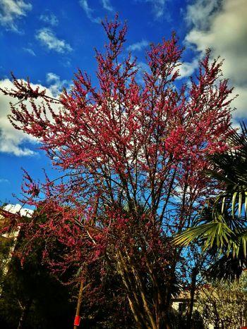 Enjoying Life Spring Colours Nature Collection Eye Em Nature Lover