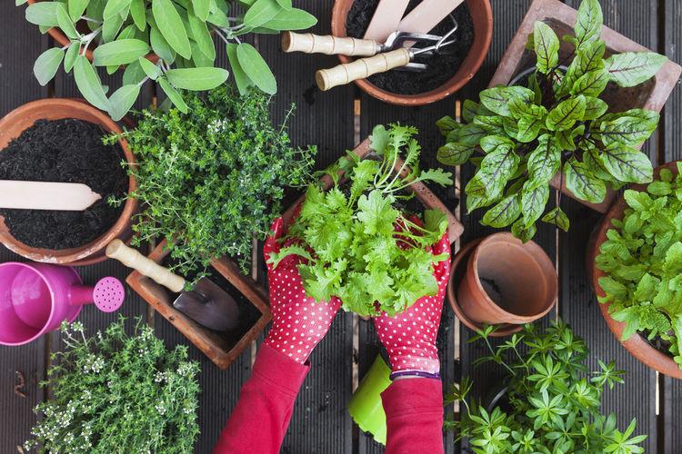 High angle view of potted plants on display