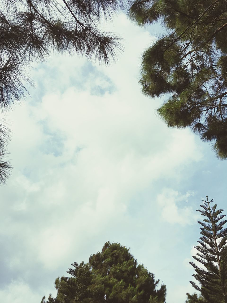 low angle view, tree, sky, nature, beauty in nature, growth, day, no people, outdoors, cloud - sky, tranquility, palm tree, branch