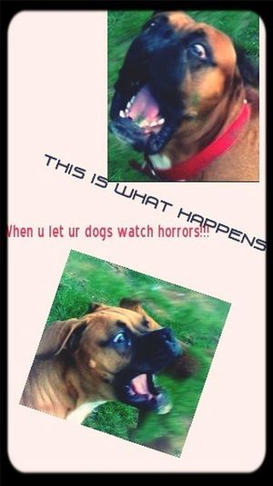So dont let them! Dogs get scared to!!!