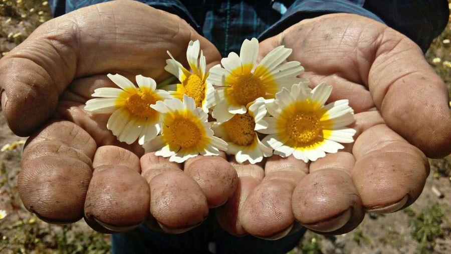 Flowers Hand