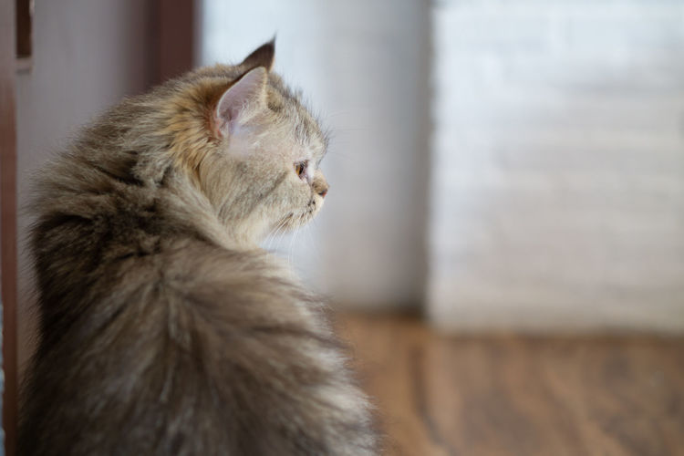 A cat sitting next to the door looking and waiting for someone. Mammal Animal Animal Themes Domestic Pets One Animal Cat Domestic Animals Domestic Cat Feline Focus On Foreground No People Looking Animal Hair Sitting Hair Close-up Side View Profile View Looking Away Contemplation Maine Coon Cat Whisker Wainting For... Space