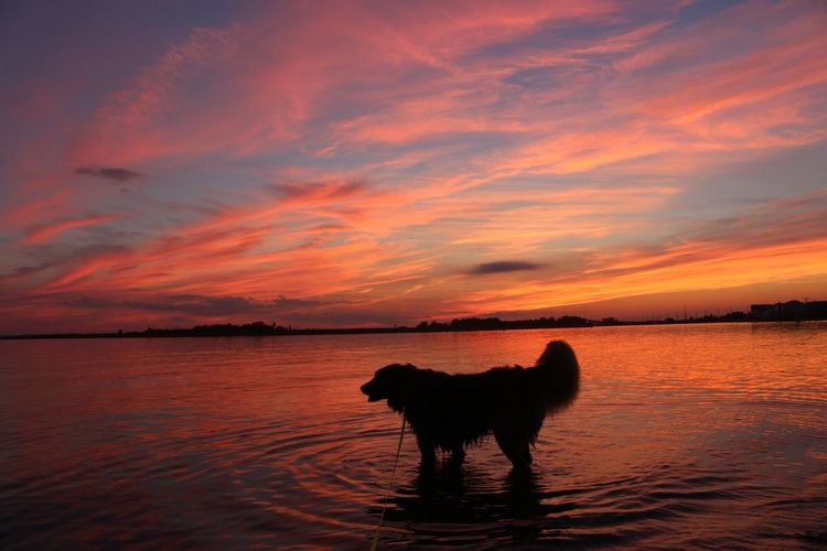 Dog On Sea Against Sky During Sunset