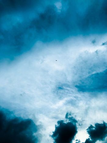 Cloud - Sky Sky Flying Low Angle View Vertebrate Beauty In Nature Bird Animal Nature No People Scenics - Nature Mid-air Animal Themes Day Blue Animals In The Wild Animal Wildlife Tranquil Scene Tranquility Outdoors