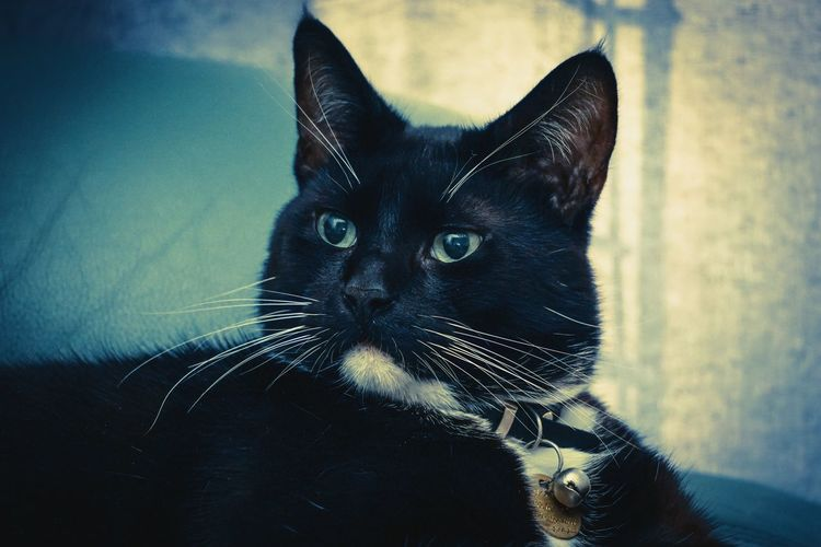 Pets Pet Photography  Cats Cat A6000