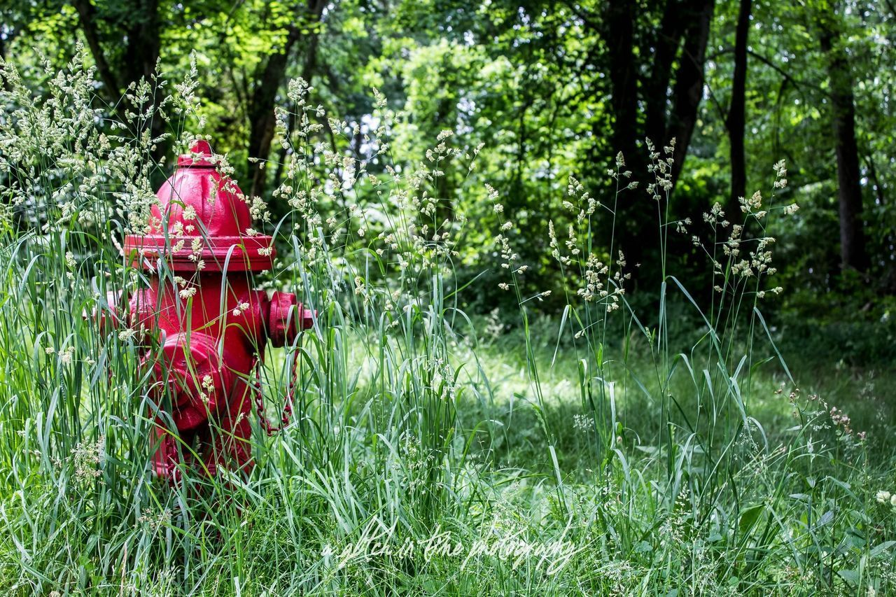 plant, red, growth, green color, land, nature, grass, tree, day, field, no people, fire hydrant, forest, outdoors, beauty in nature, landscape, focus on foreground, tranquility, foliage, plain
