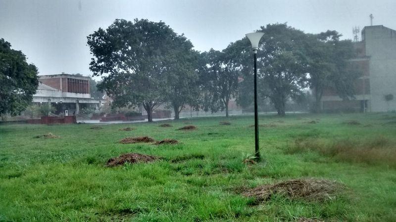 Unexpo College Rain Green