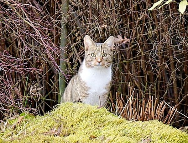 Neighbor's cat ;-) Animal Themes Cats 🐱 Daswasichsehe😊 Day Domestic Animals Domestic Cat Enjoying Life Feline Goodevening  Hobbyphotography Katzenliebe Lovely Mammal March Mondayevening MyWorld ♡ Nature Photography Naturelovers No People One Animal Outdoors Pets Plant Portrait Sitting