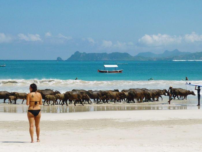 Nature Sea Getting Inspired Beautiful INDONESIA Smile Love Summer Sunshine Animals