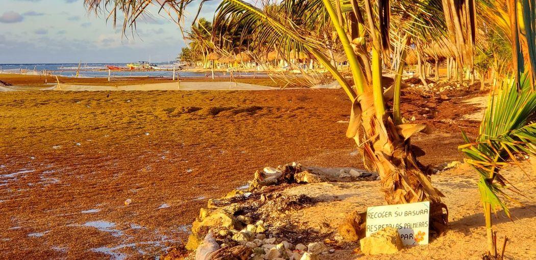 The Traveler - 2019 EyeEm Awards Tree Beach Sea Sand Communication Sky The Photojournalist - 2019 EyeEm Awards