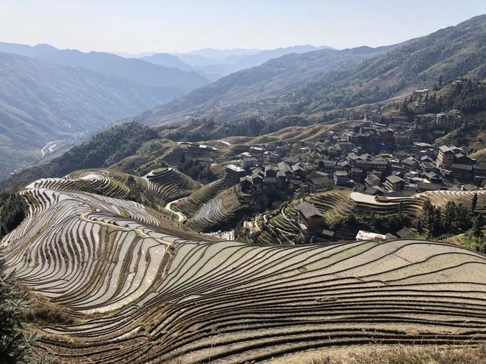Stepping Field Terraced Field Mountain Rice Paddy Agriculture Landscape