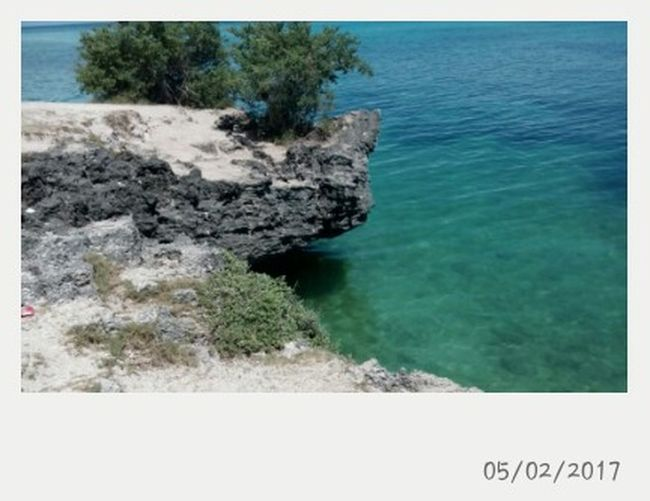 Sea Nature No People Scenics Tree Beach Water Cliffside Beauty In Nature
