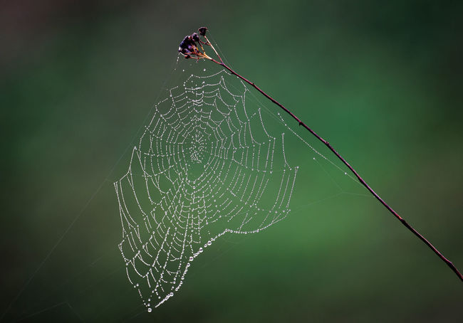 Russia, Oka river, fog, early morning Animal Animal Themes Animal Wildlife Animals In The Wild Beauty In Nature Close-up Complexity Day Early Morning Focus On Foreground Fragility Invertebrate Natural Pattern Nature No People One Animal Outdoors Pattern Spider Web Vulnerability  Web Wet
