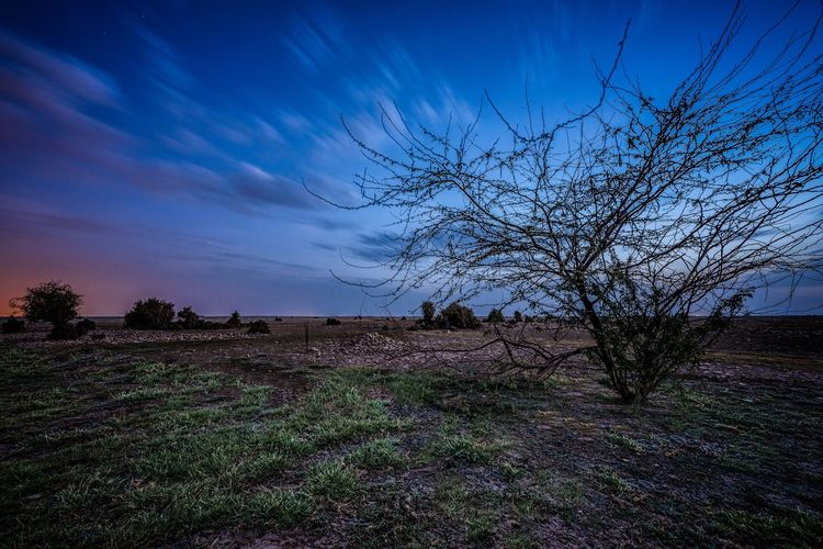 Dessert's Blue Hour Sky Plant Beauty In Nature Nature Cloud - Sky No People Tranquility Scenics - Nature Tranquil Scene Field Landscape Environment Land Tree Growth Outdoors Blue Silhouette Grass Idyllic