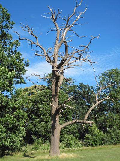 Tree Tree Blue