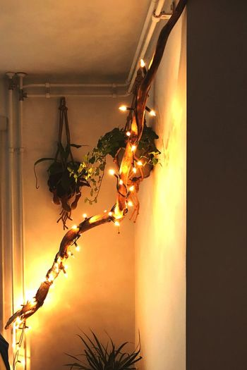 Illuminated Hanging Lighting Equipment No People Indoors  Home Interior Nature Close-up Sky Day Plant Home Warmth