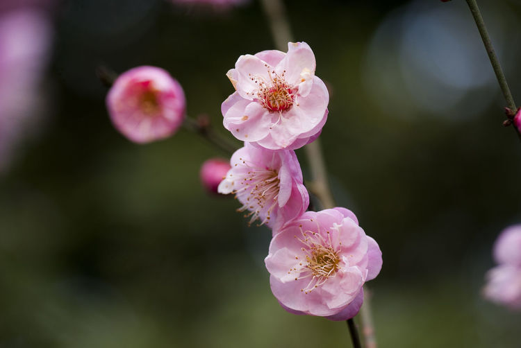 Outdoors Living Organism Day Beauty In Nature Tree Close-up No People Nature Growth Springtime Plant
