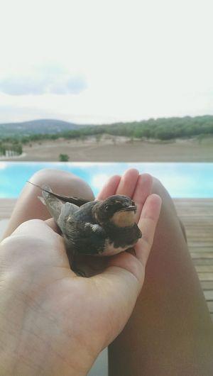 Freebird Traveling Beautiful Nature Enjoying Life