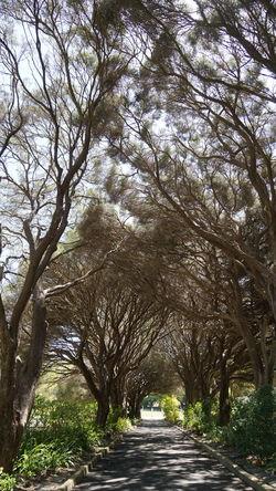 Tree Branch Sunlight Sky Walkway Long