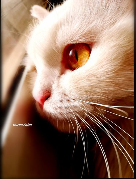 Cat Cats Cat♡ Cat Lovers Cats 🐱 Cats Of EyeEm Catseyes Cat Face Close Up Face Cat Lovers 🐱💞 Animal Theme Beautiful Cat Cat Photography Beautiful Animals  Cat Lovers Cats Lovers  Domestic Cat Close-up Close Up Open Eyes Looking Through The Window Pets My Cat I Love My Cat ❤ Totssy 😍😍 🐈🐱😍♥💜❤