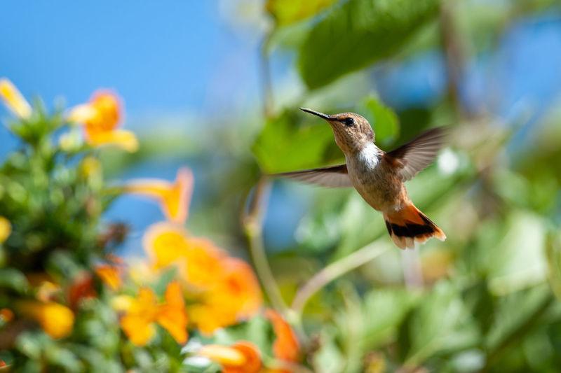 Bird flying over white flower