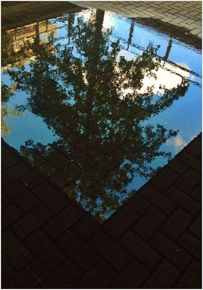 Reflection Saterday Upside Down Trees Water Reflections