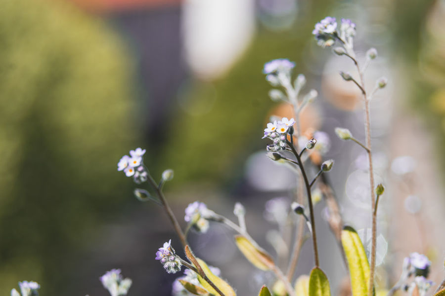 Spring time I Beauty In Nature Close-up Day Flower Flower Head Flowering Plant Focus On Foreground Fragility Freshness Growth Nature No People Outdoors Petal Plant Plant Stem Pollination Selective Focus Springtime Vulnerability  White Color