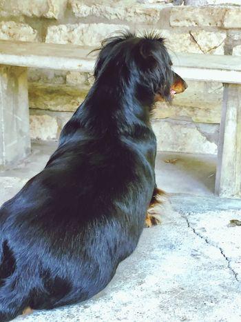 Weeniedog Long Hair, Don't Care. Dachshundsofeyeem Dachshundlove