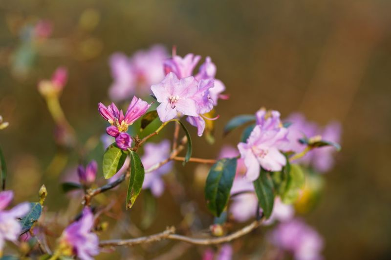 EyeEm Selects Flower Flowering Plant Plant Beauty In Nature Freshness Pink Color